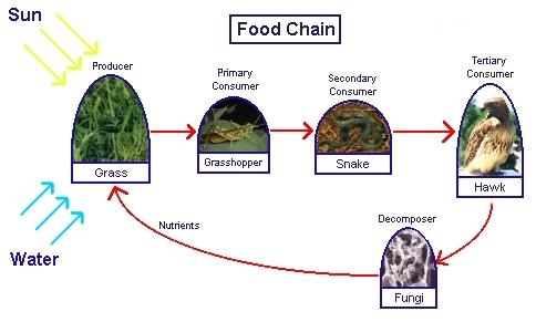 Describe the fo... Quaternary Consumer